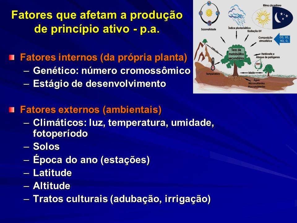 Fatores que afetam a produção de princípio ativo - p.a. Fatores internos (da própria planta) –Genético: número cromossômico –Estágio de desenvolviment