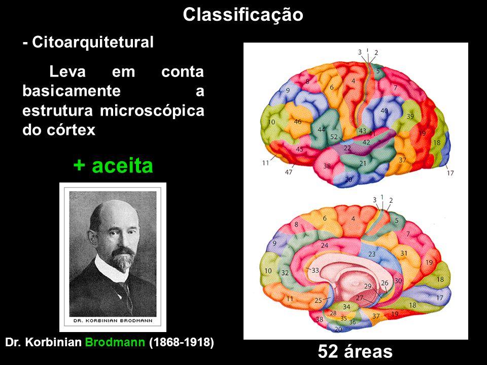 Classificação - Citoarquitetural Leva em conta basicamente a estrutura microscópica do córtex + aceita Dr. Korbinian Brodmann (1868-1918) 52 áreas
