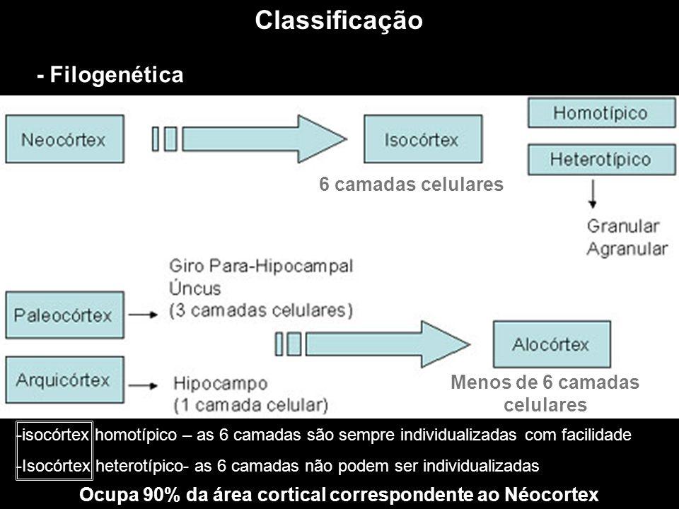 Classificação - Filogenética 6 camadas celulares Menos de 6 camadas celulares -isocórtex homotípico – as 6 camadas são sempre individualizadas com fac