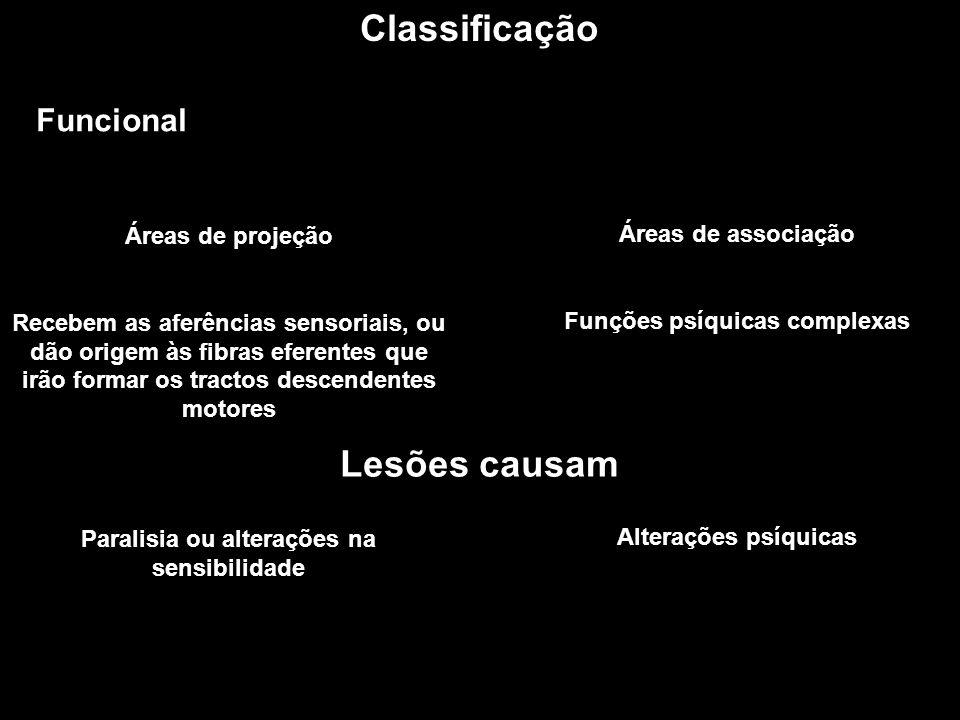 Classificação Funcional Áreas de projeção Recebem as aferências sensoriais, ou dão origem às fibras eferentes que irão formar os tractos descendentes