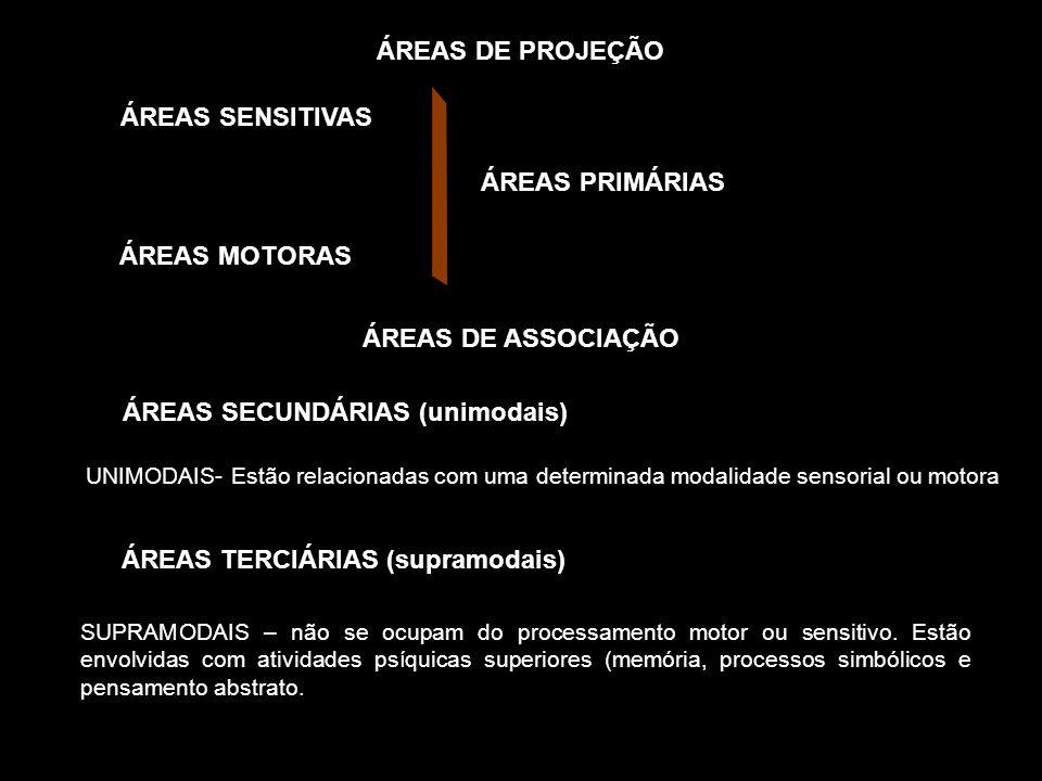 ÁREAS DE PROJEÇÃO ÁREAS SENSITIVAS ÁREAS MOTORAS ÁREAS PRIMÁRIAS UNIMODAIS- Estão relacionadas com uma determinada modalidade sensorial ou motora ÁREA