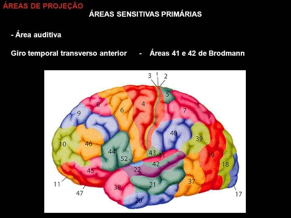 ÁREAS SENSITIVAS PRIMÁRIAS - Área auditiva - Áreas 41 e 42 de BrodmannGiro temporal transverso anterior ÁREAS DE PROJEÇÃO