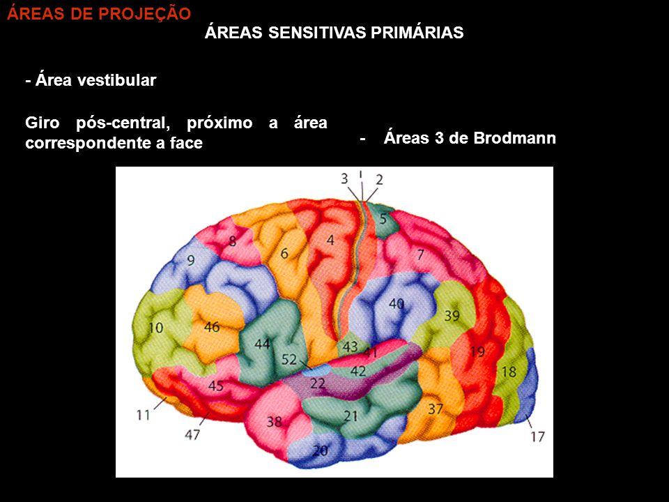 ÁREAS SENSITIVAS PRIMÁRIAS - Área vestibular - Áreas 3 de Brodmann Giro pós-central, próximo a área correspondente a face ÁREAS DE PROJEÇÃO
