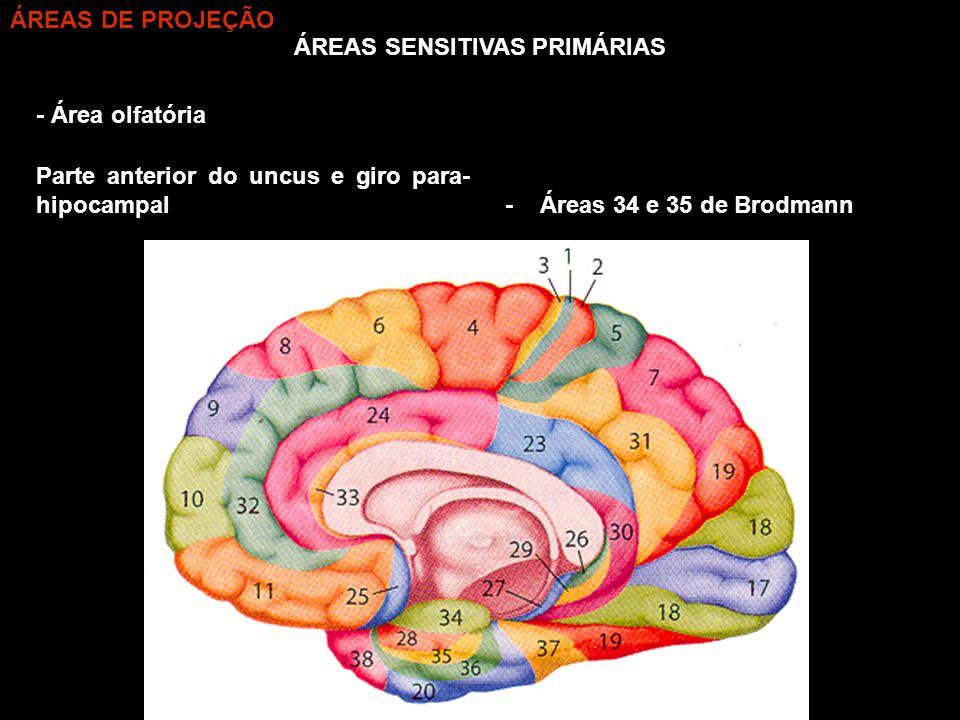ÁREAS SENSITIVAS PRIMÁRIAS - Área olfatória - Áreas 34 e 35 de Brodmann Parte anterior do uncus e giro para- hipocampal ÁREAS DE PROJEÇÃO