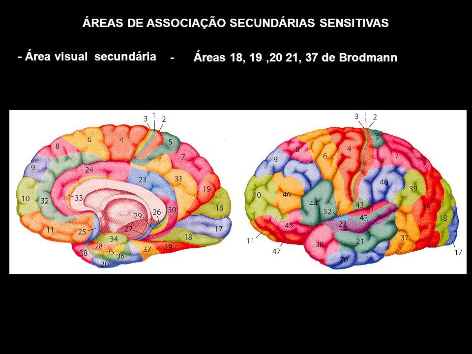 ÁREAS DE ASSOCIAÇÃO SECUNDÁRIAS SENSITIVAS - Área visual secundária - Áreas 18, 19,20 21, 37 de Brodmann