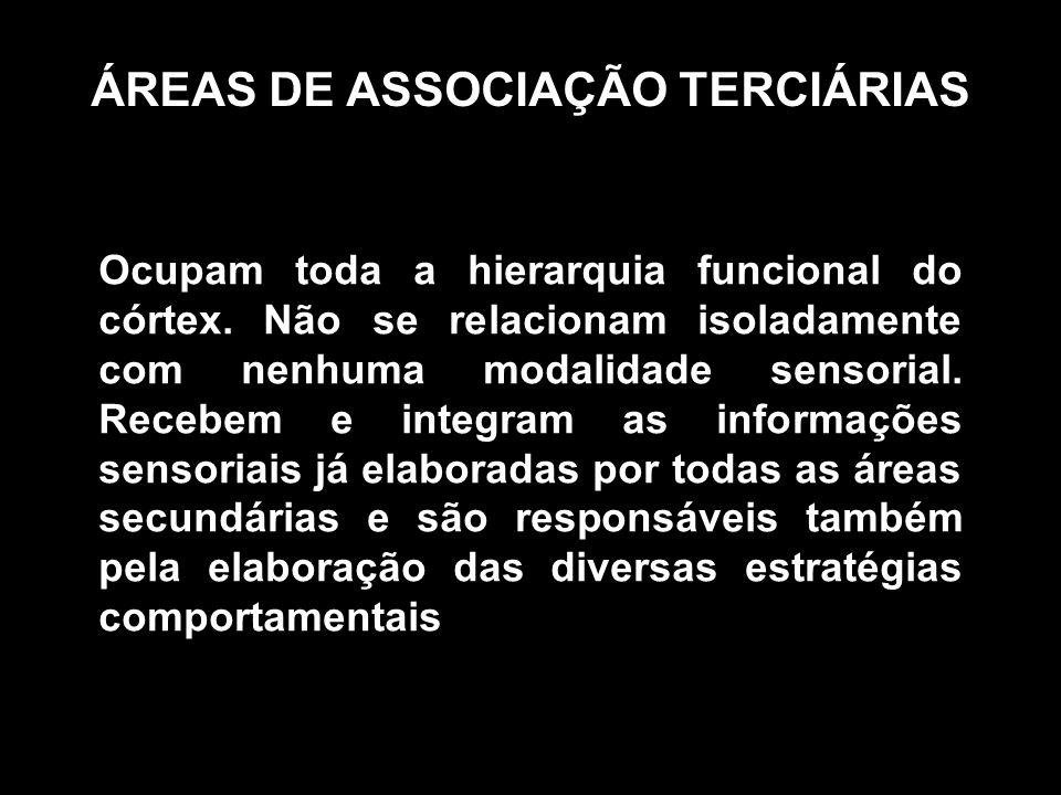 ÁREAS DE ASSOCIAÇÃO TERCIÁRIAS Ocupam toda a hierarquia funcional do córtex. Não se relacionam isoladamente com nenhuma modalidade sensorial. Recebem