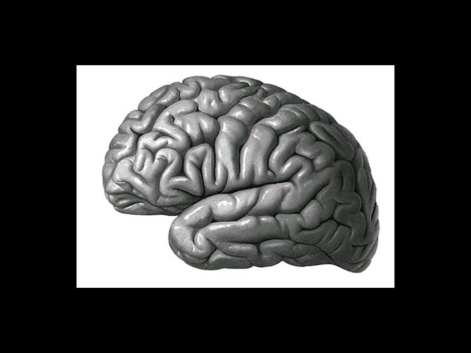 ÁREAS DE PROJEÇÃO ÁREAS SENSITIVAS ÁREAS MOTORAS ÁREAS PRIMÁRIAS UNIMODAIS- Estão relacionadas com uma determinada modalidade sensorial ou motora ÁREAS DE ASSOCIAÇÃO ÁREAS SECUNDÁRIAS (unimodais) ÁREAS TERCIÁRIAS (supramodais) SUPRAMODAIS – não se ocupam do processamento motor ou sensitivo.
