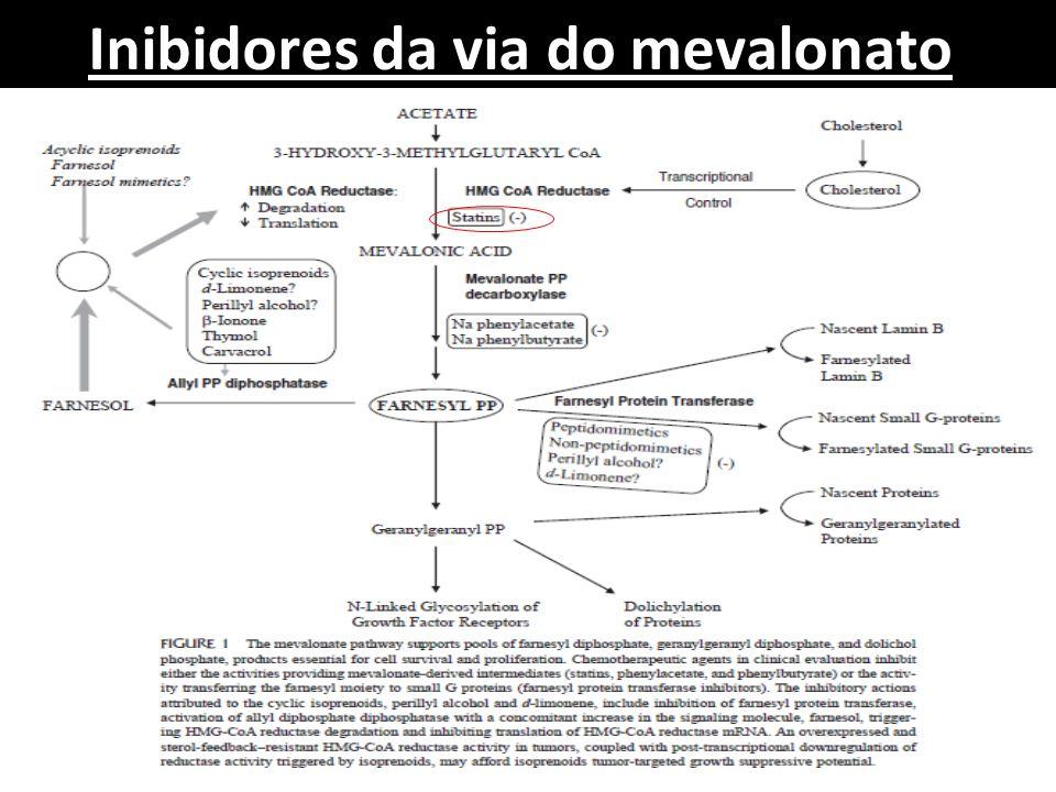 Inibidores da via do mevalonato