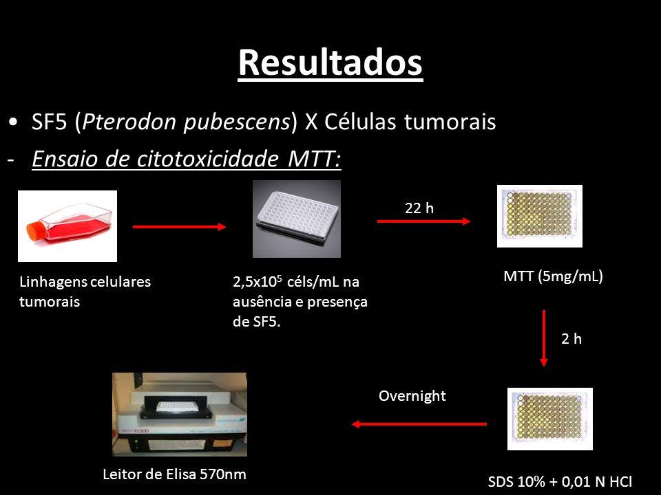 Resultados SF5 (Pterodon pubescens) X Células tumorais -Ensaio de citotoxicidade MTT: Linhagens celulares tumorais 2,5x10 5 céls/mL na ausência e pres
