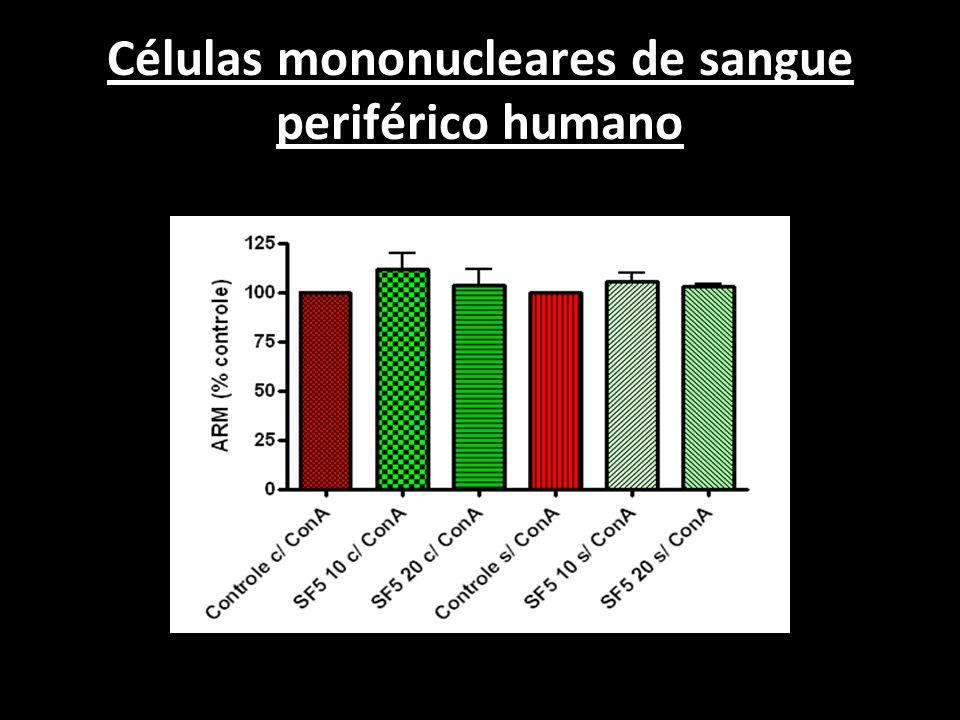 Células mononucleares de sangue periférico humano