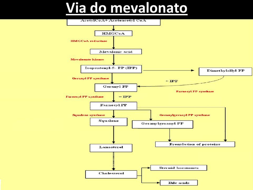 Regulação da via do mevalonato