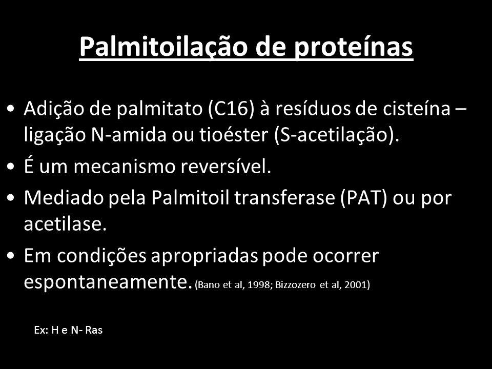 Palmitoilação de proteínas Adição de palmitato (C16) à resíduos de cisteína – ligação N-amida ou tioéster (S-acetilação). É um mecanismo reversível. M