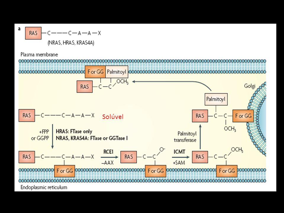 Regulação da superfamíla Ras- GTPases Câncer: Ras continuamente associada a GTP Proliferação celular acentuada