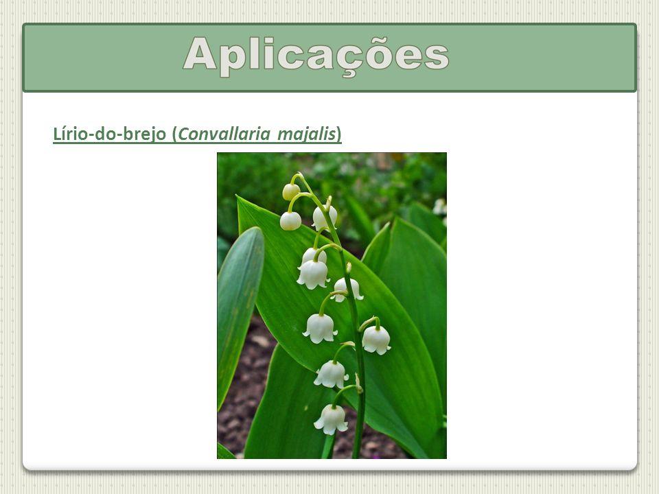 Lírio-do-brejo (Convallaria majalis)