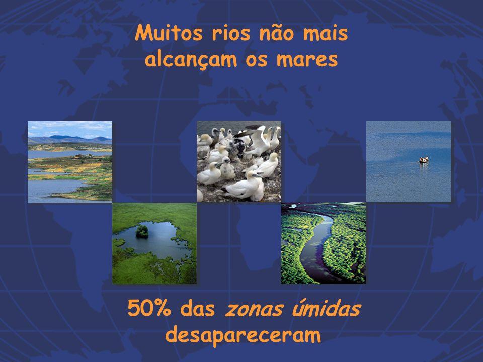 50% das zonas úmidas desapareceram Muitos rios não mais alcançam os mares