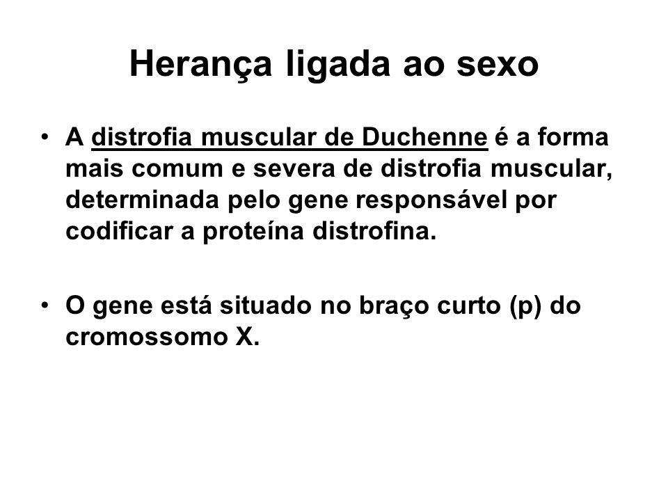 Herança ligada ao sexo A distrofia muscular de Duchenne é a forma mais comum e severa de distrofia muscular, determinada pelo gene responsável por cod