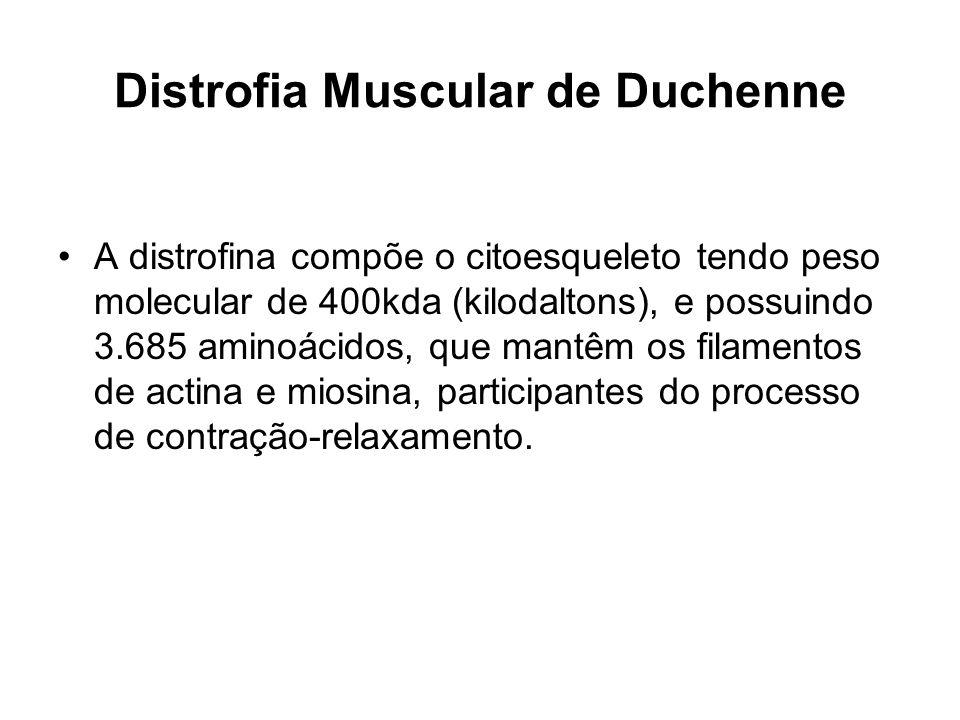 Distrofia Muscular de Duchenne A distrofina compõe o citoesqueleto tendo peso molecular de 400kda (kilodaltons), e possuindo 3.685 aminoácidos, que ma