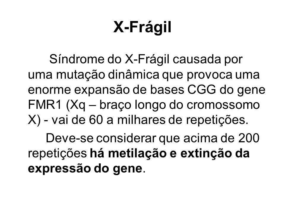 X-Frágil Síndrome do X-Frágil causada por uma mutação dinâmica que provoca uma enorme expansão de bases CGG do gene FMR1 (Xq – braço longo do cromosso