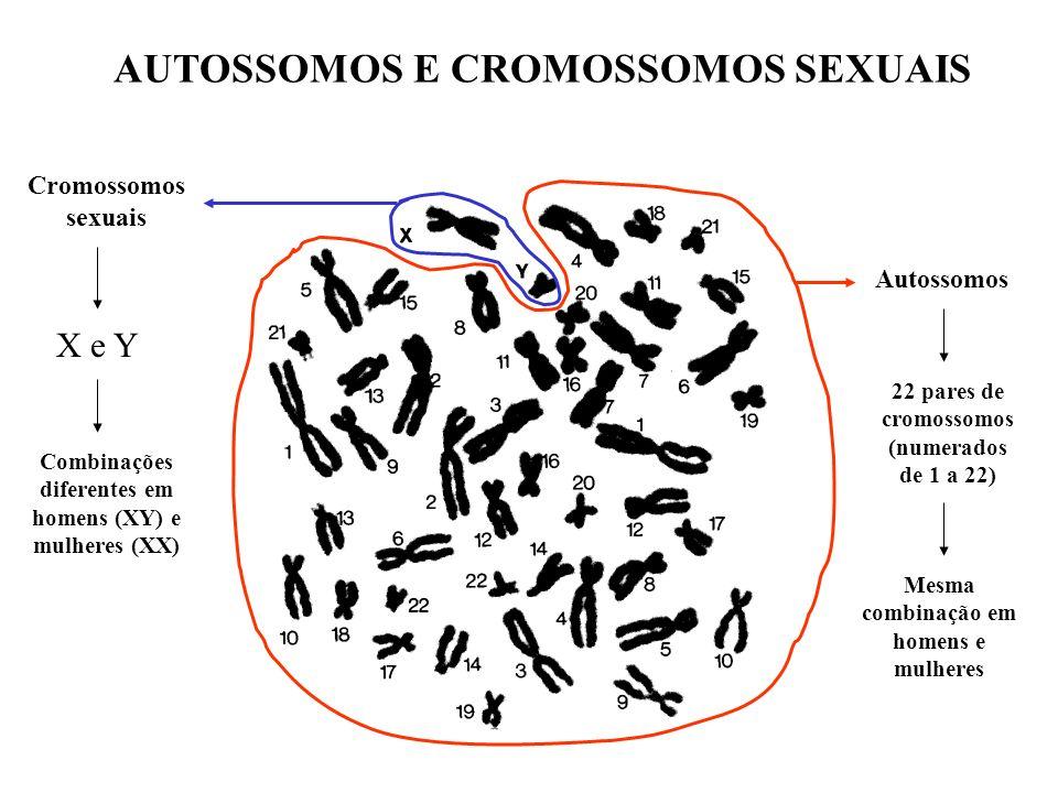 Cromossomos sexuais X e Y Combinações diferentes em homens (XY) e mulheres (XX) Autossomos 22 pares de cromossomos (numerados de 1 a 22) Mesma combina