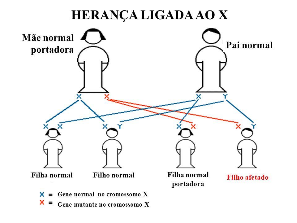 HERANÇA LIGADA AO X Pai normal Mãe normal portadora Gene mutante no cromossomo X Gene normal no cromossomo X Filha normalFilho normal Filha normal por