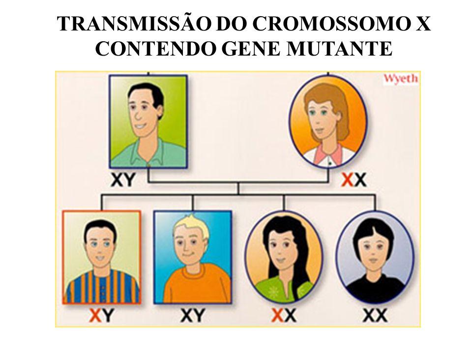TRANSMISSÃO DO CROMOSSOMO X CONTENDO GENE MUTANTE