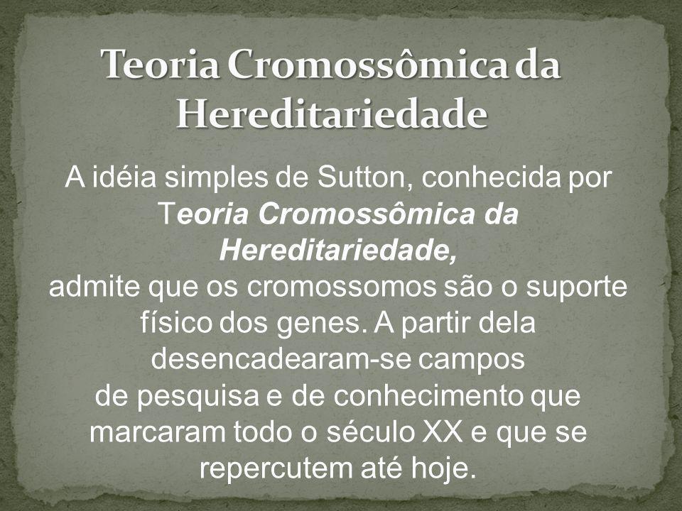 A idéia simples de Sutton, conhecida por Teoria Cromossômica da Hereditariedade, admite que os cromossomos são o suporte físico dos genes. A partir de
