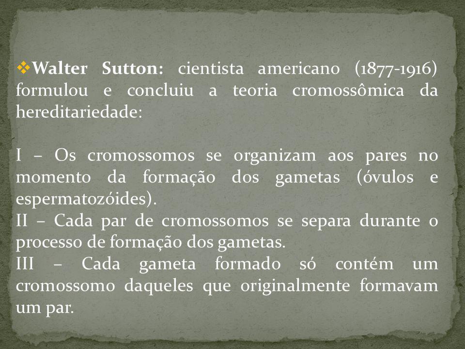 Walter Sutton: cientista americano (1877-1916) formulou e concluiu a teoria cromossômica da hereditariedade: I – Os cromossomos se organizam aos pares