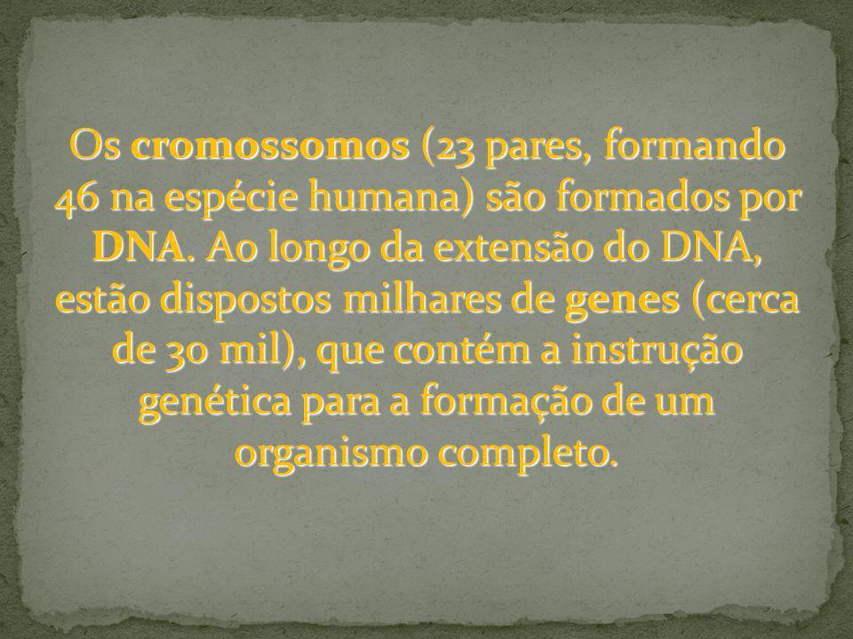 Os cromossomos (23 pares, formando 46 na espécie humana) são formados por DNA. Ao longo da extensão do DNA, estão dispostos milhares de genes (cerca d