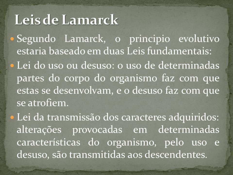 Segundo Lamarck, o principio evolutivo estaria baseado em duas Leis fundamentais: Lei do uso ou desuso: o uso de determinadas partes do corpo do organ