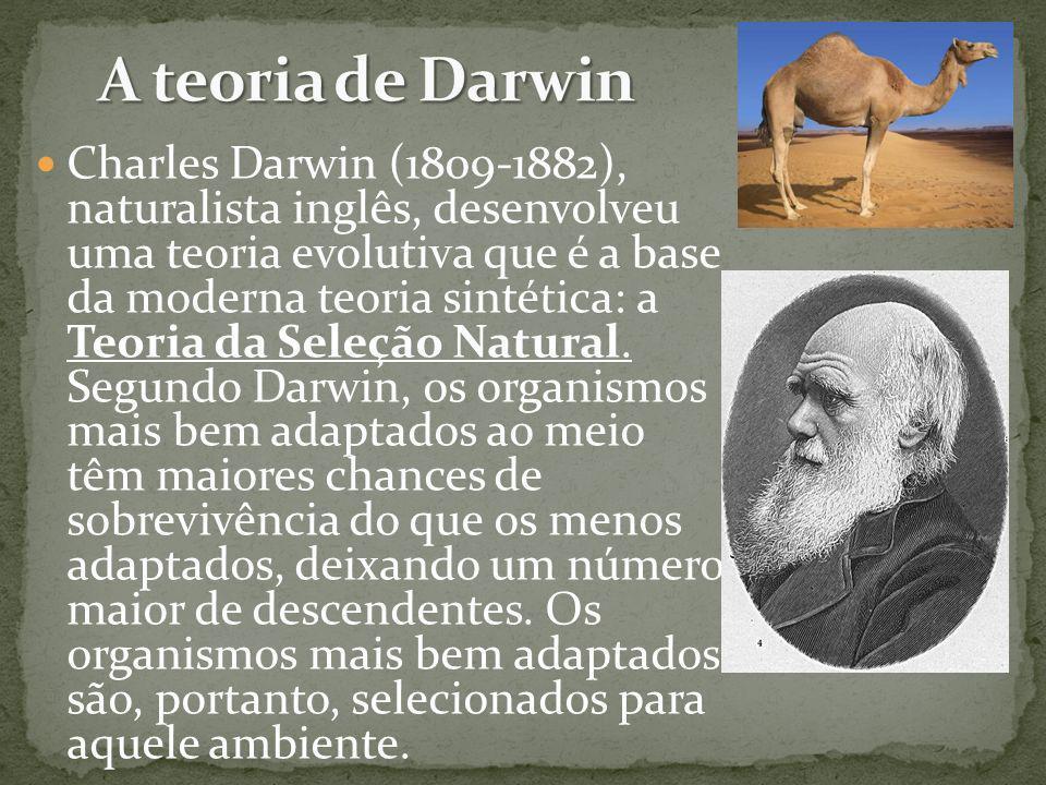 Charles Darwin (1809-1882), naturalista inglês, desenvolveu uma teoria evolutiva que é a base da moderna teoria sintética: a Teoria da Seleção Natural