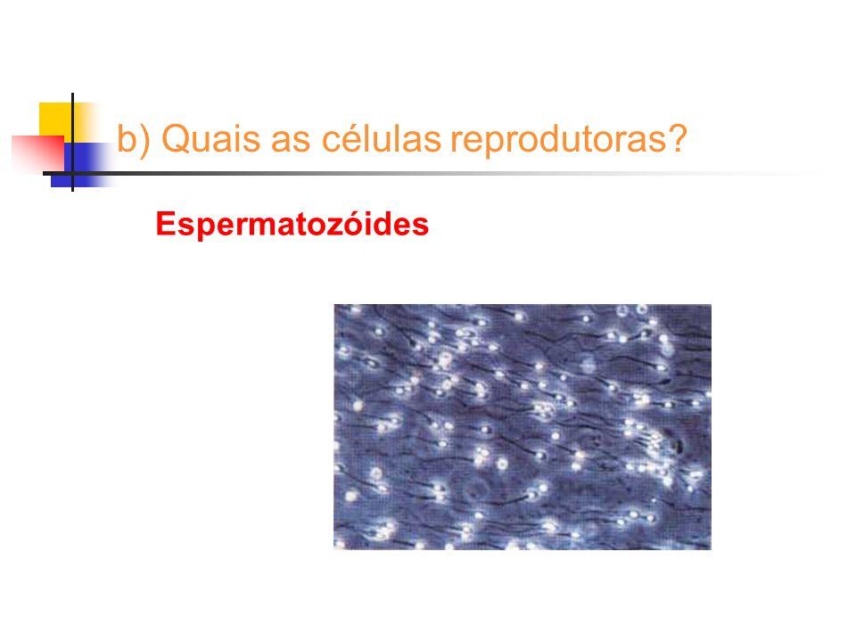 b) Quais as células reprodutoras? Óvulos
