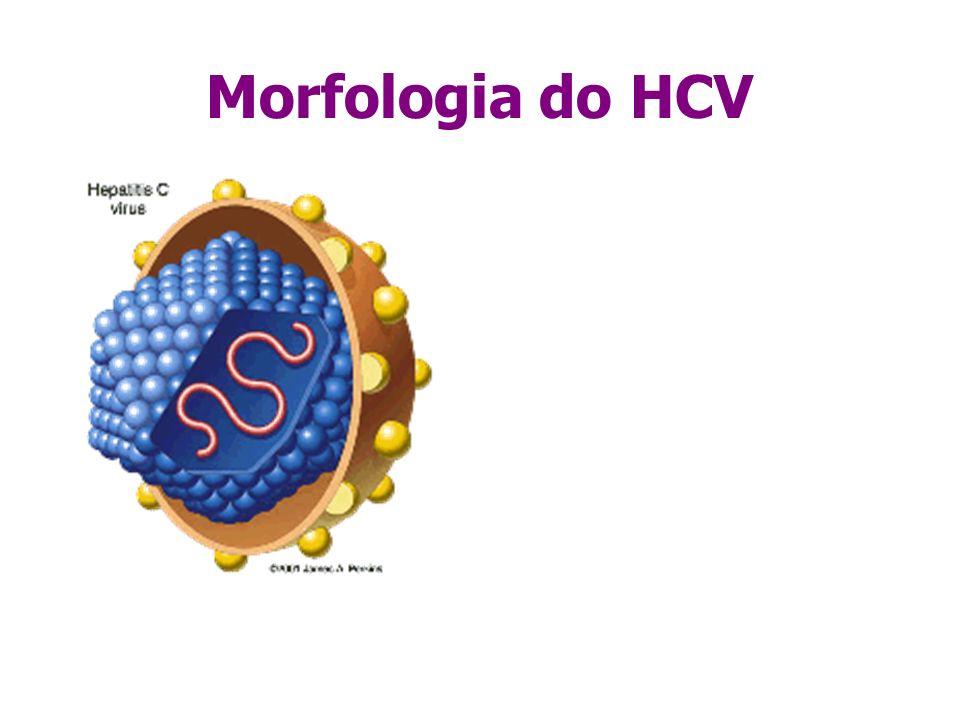 Morfologia do HCV