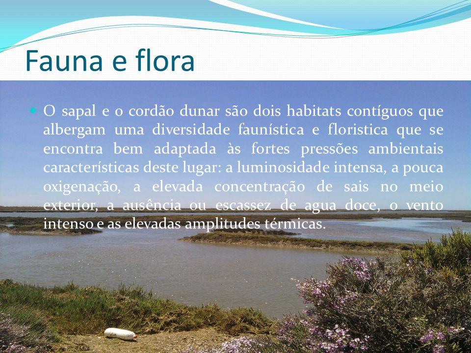 Fauna e flora O sapal e o cordão dunar são dois habitats contíguos que albergam uma diversidade faunística e floristica que se encontra bem adaptada à