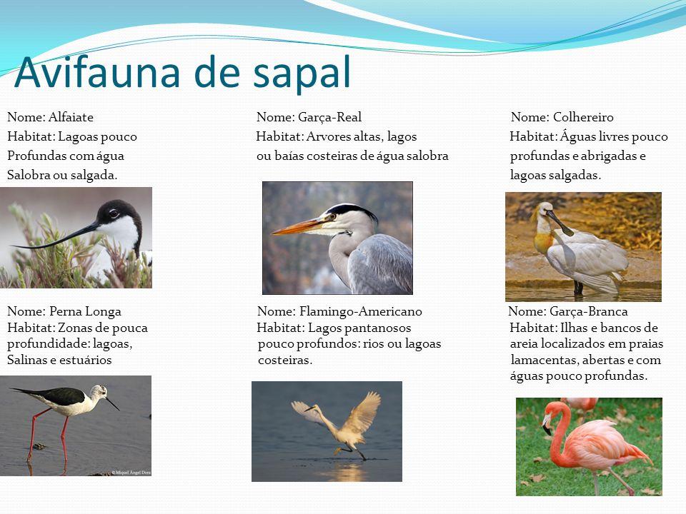 Avifauna de sapal Nome: Alfaiate Nome: Garça-Real Nome: Colhereiro Habitat: Lagoas pouco Habitat: Arvores altas, lagos Habitat: Águas livres pouco Pro