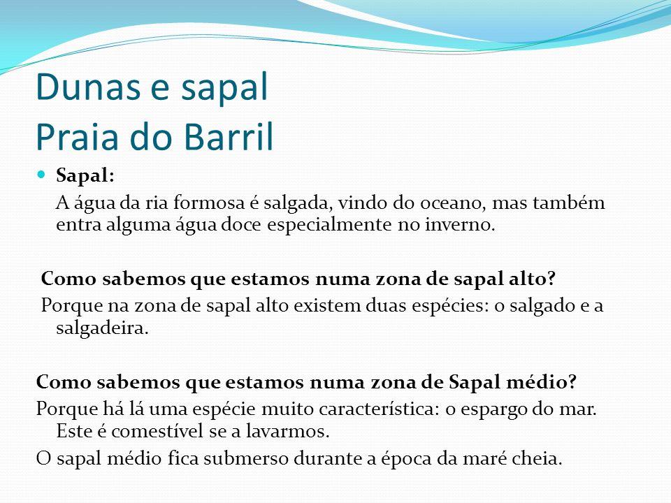 Dunas e sapal Praia do Barril Sapal: A água da ria formosa é salgada, vindo do oceano, mas também entra alguma água doce especialmente no inverno. Com