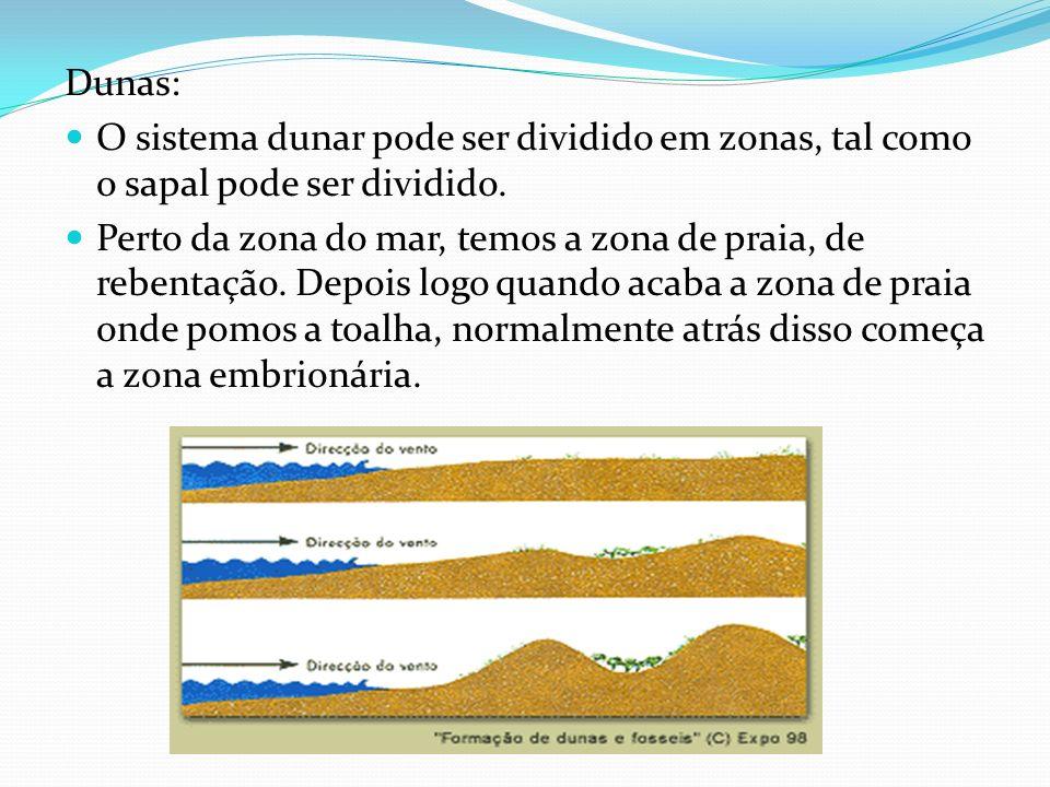Dunas: O sistema dunar pode ser dividido em zonas, tal como o sapal pode ser dividido. Perto da zona do mar, temos a zona de praia, de rebentação. Dep