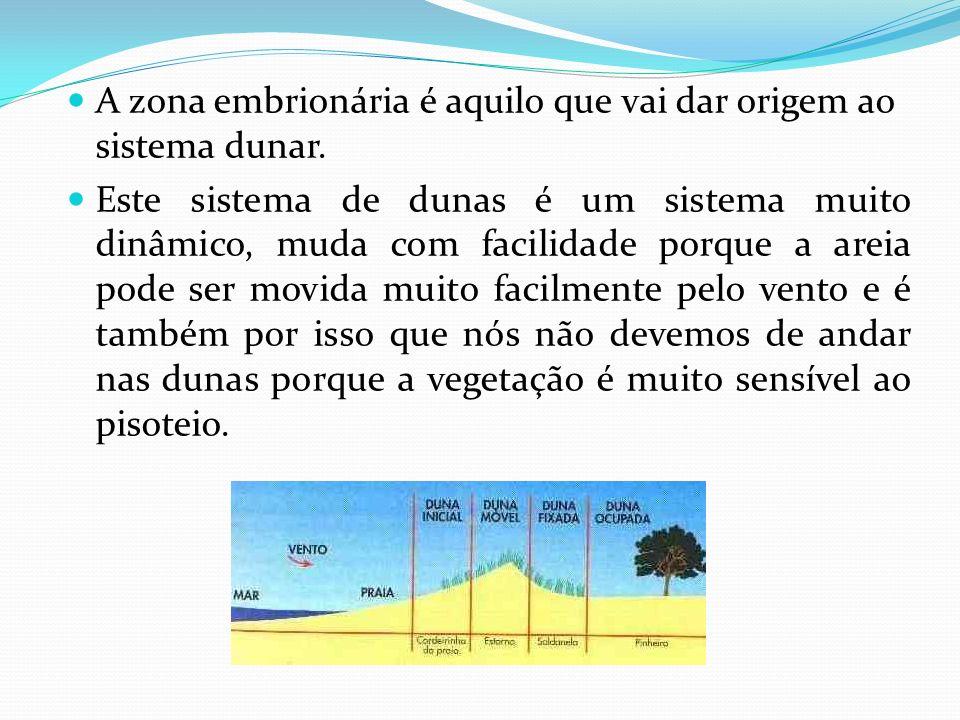 A zona embrionária é aquilo que vai dar origem ao sistema dunar. Este sistema de dunas é um sistema muito dinâmico, muda com facilidade porque a areia