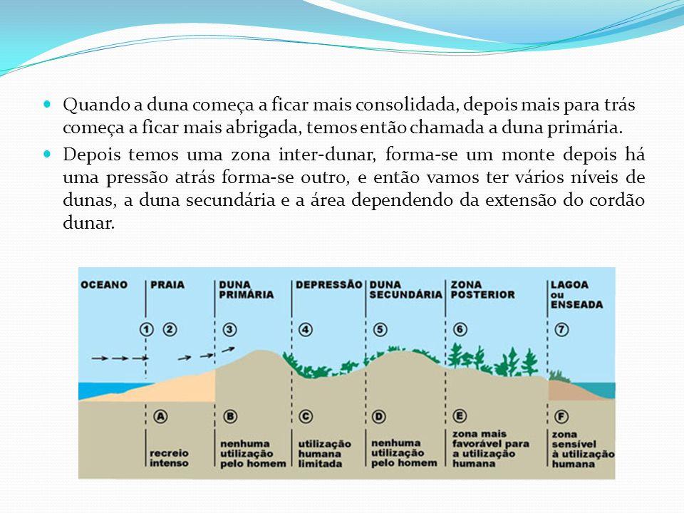 Quando a duna começa a ficar mais consolidada, depois mais para trás começa a ficar mais abrigada, temos então chamada a duna primária. Depois temos u