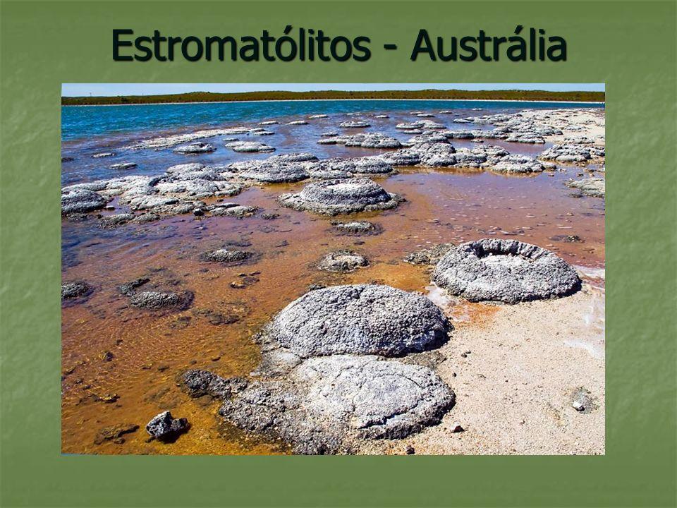 As primeiras formas de vida evoluíram no mar, pois só aí se encontravam as condições necessárias a essa evolução.