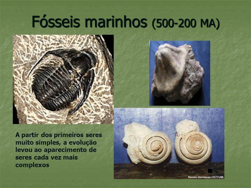 Flora (200 MA) fetos arbóreos, cicas Os seres vivos surgiram primeiro na água, mas depois «invadiram» a terra…