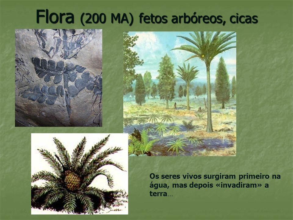 Dinossauros (200 MA) Há cerca de 200MA os grandes répteis herbívoros e carnívoros habitavam grande parte da Terra