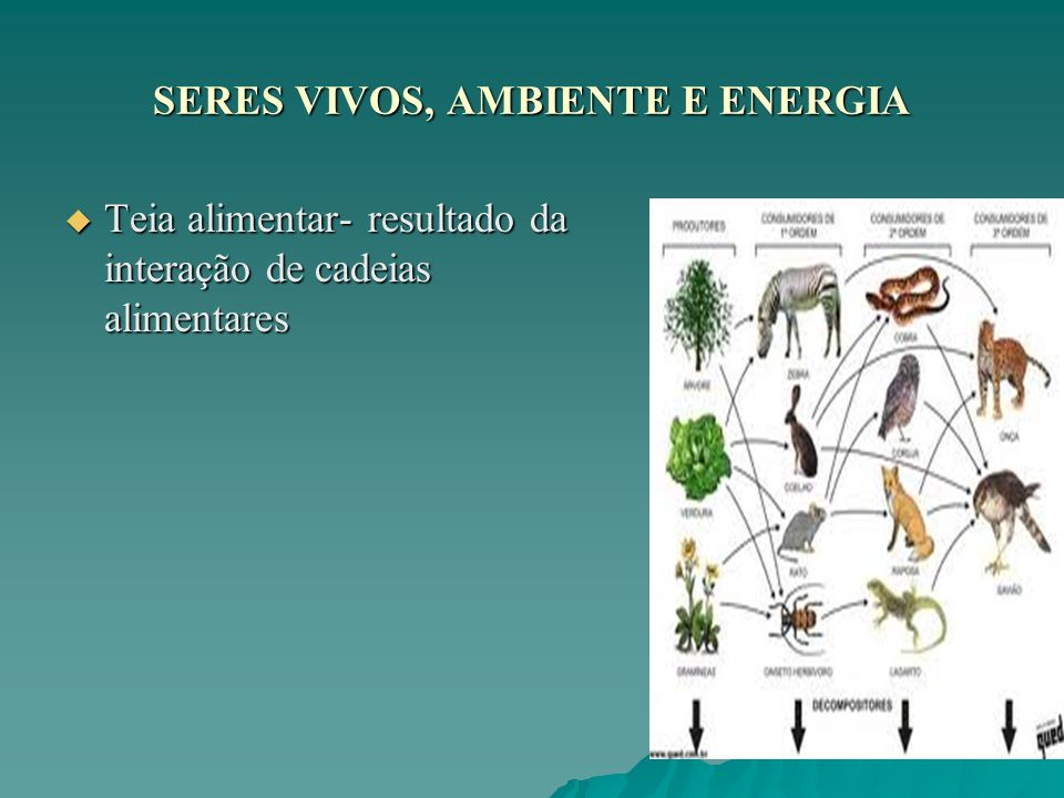SERES VIVOS, AMBIENTE E ENERGIA Teia alimentar- resultado da interação de cadeias alimentares Teia alimentar- resultado da interação de cadeias alimen