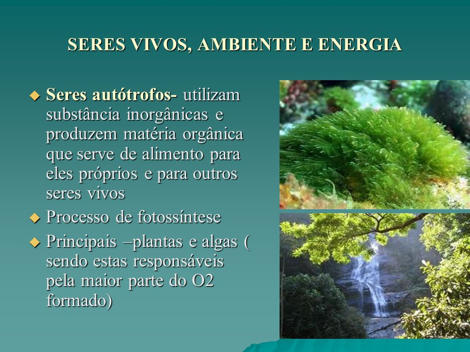SERES VIVOS, AMBIENTE E ENERGIA Seres autótrofos- utilizam substância inorgânicas e produzem matéria orgânica que serve de alimento para eles próprios