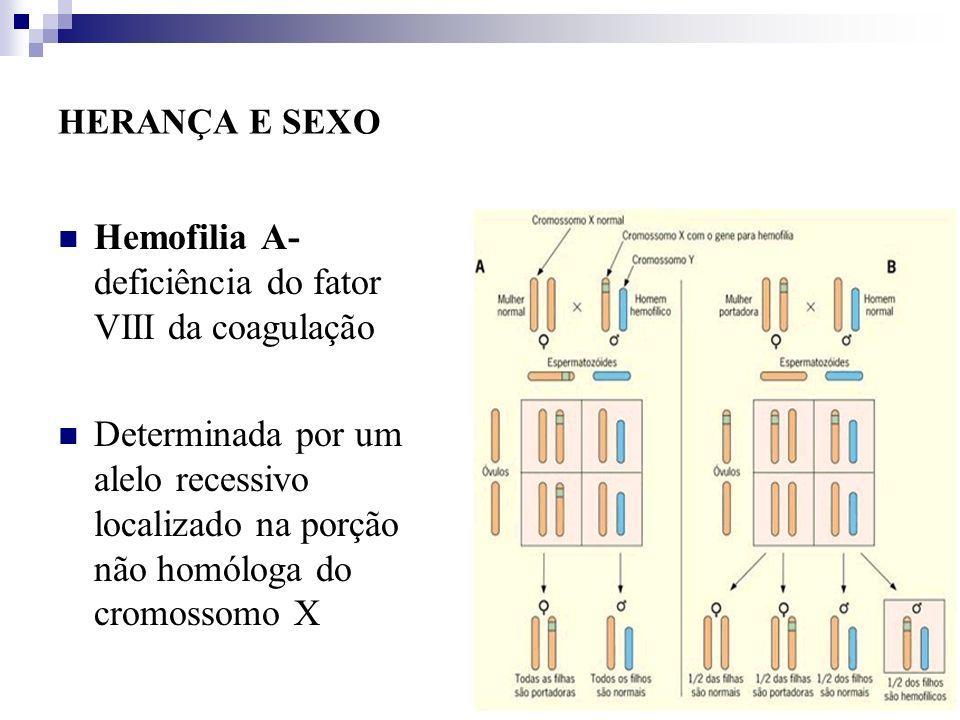 HERANÇA E SEXO Hemofilia A- deficiência do fator VIII da coagulação Determinada por um alelo recessivo localizado na porção não homóloga do cromossomo