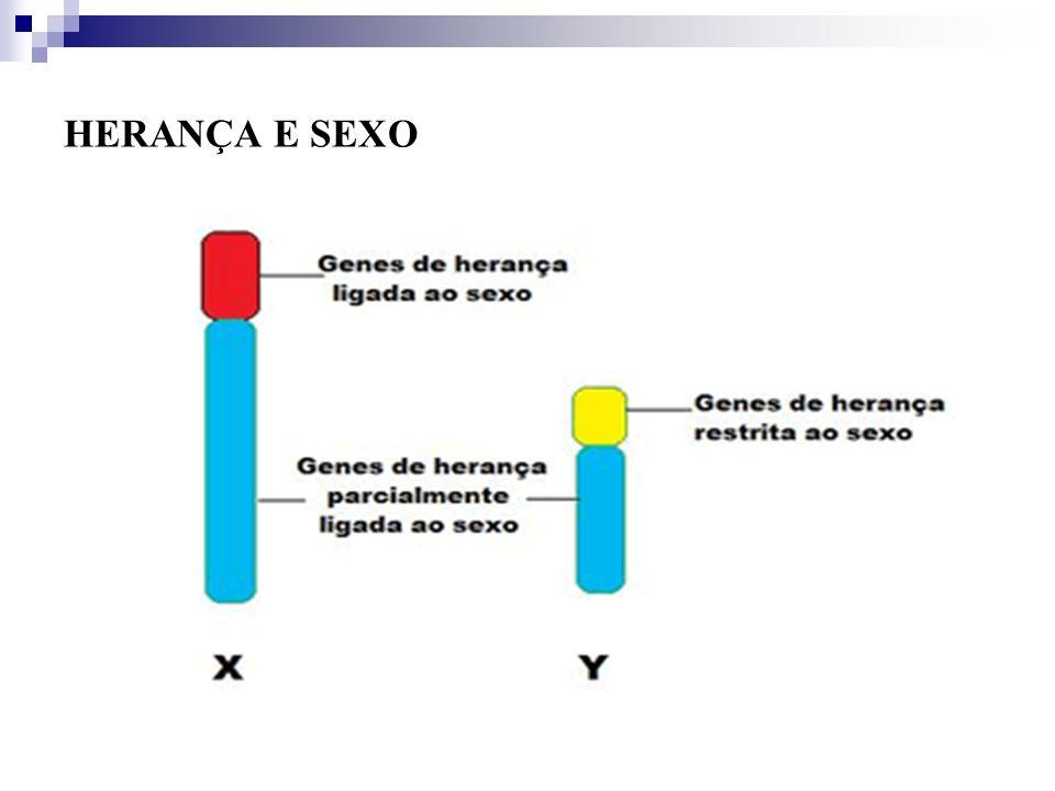 HERANÇA E SEXO Herança limitada ao sexo- manifestação fenotípica ocorre em apenas um dos sexos e está ligada a fatores anatômicos e hormonais (gado bovino da raça holandesa)