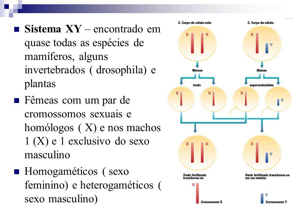 Sistema XY – encontrado em quase todas as espécies de mamíferos, alguns invertebrados ( drosophila) e plantas Fêmeas com um par de cromossomos sexuais
