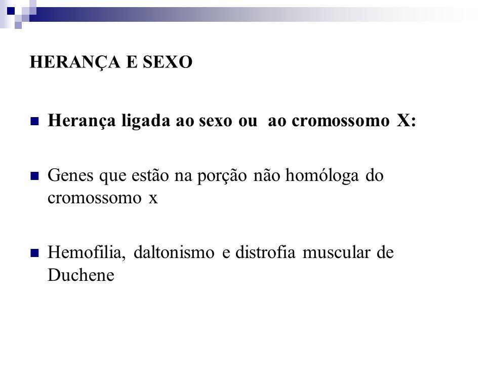 HERANÇA E SEXO Herança ligada ao sexo ou ao cromossomo X: Genes que estão na porção não homóloga do cromossomo x Hemofilia, daltonismo e distrofia mus