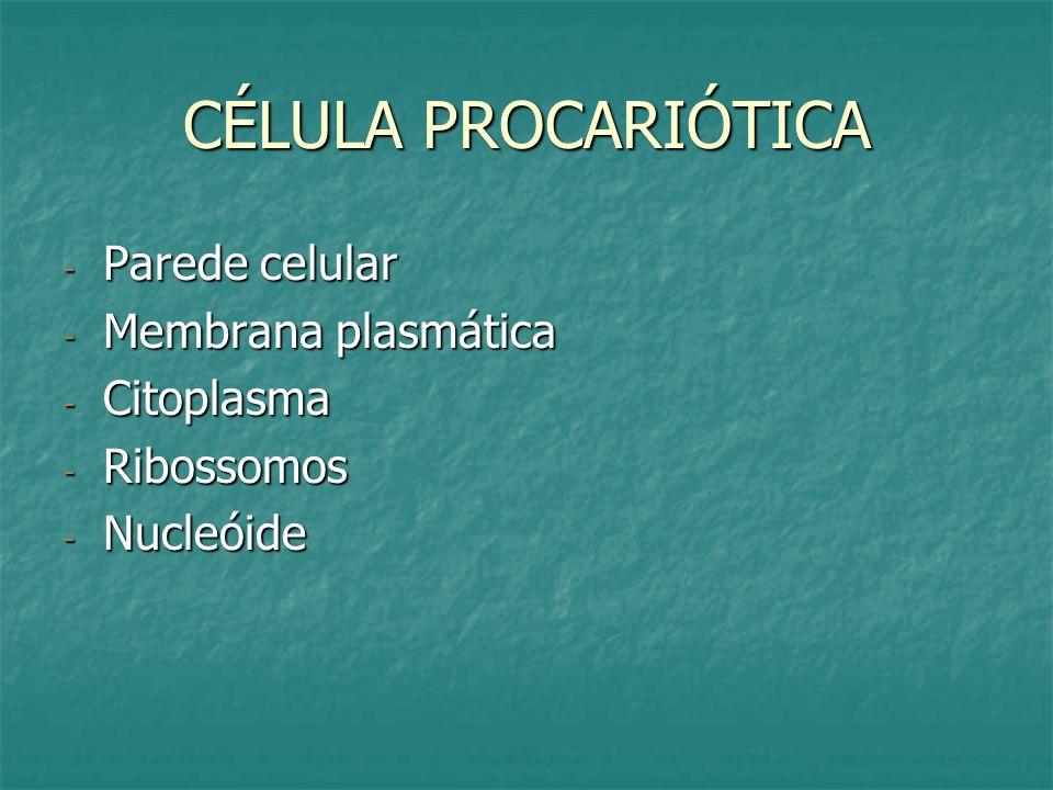 CÉLULA PROCARIÓTICA - Parede celular - Membrana plasmática - Citoplasma - Ribossomos - Nucleóide