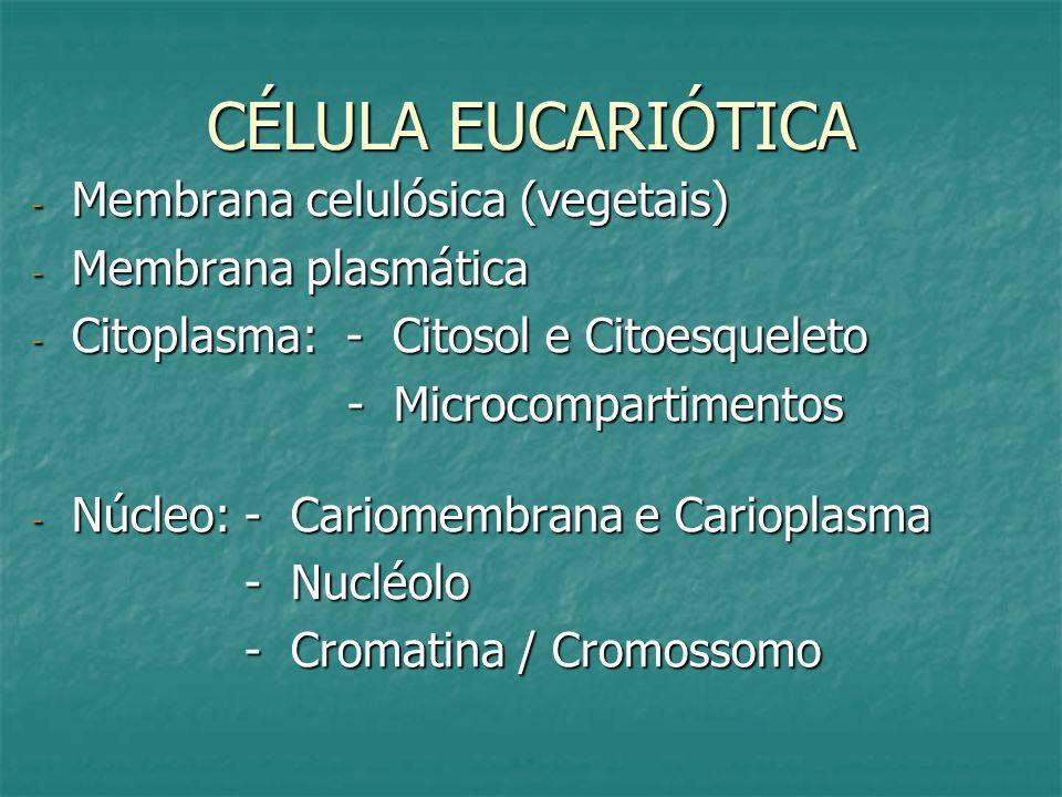 CÉLULA EUCARIÓTICA - Membrana celulósica (vegetais) - Membrana plasmática - Citoplasma: - Citosol e Citoesqueleto - Microcompartimentos - Microcompart
