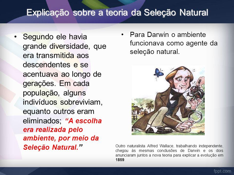 Explicação sobre a teoria da Seleção Natural Segundo ele havia grande diversidade, que era transmitida aos descendentes e se acentuava ao longo de ger